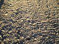 Processed farm ground.jpg