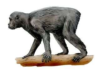 Proconsul (mammal) - Reconstruction