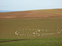 Punctuation - geograph.org.uk - 355817.jpg