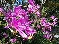Purple flowers in Motoazabu.jpg