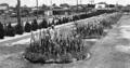 Queensland State Archives 1401 Eventide Home Sandgate October 1949.png