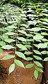 Rain forest 9.jpg