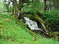Rapids through woodland - geograph.org.uk - 753655.jpg