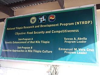 Aquaculture of tilapia - Image: Rednilejf