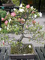 Rhododendron indicum 01c by Line1.jpg