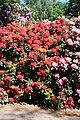 Rhododendronpark Bremen 20090513 116.JPG