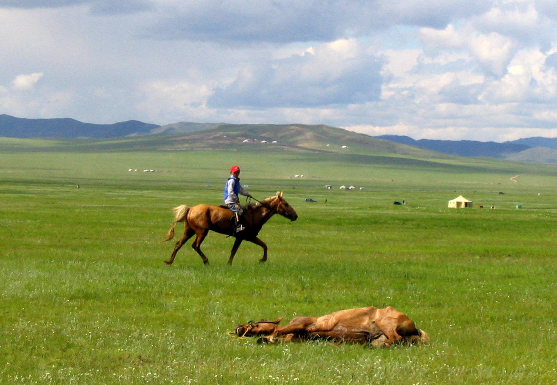 Kuc mongolski - Horse Scanner
