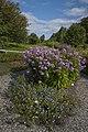 Ringve botaniske hage foto-åge hojem NTNU Vitenskapsmuseet DSC3118 (15287162035).jpg