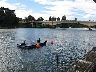 Valdivia River - View of the upper course of Valdivia River. Pedro de Valdivia Bridge is seen in the background.