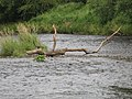 River Wear - geograph.org.uk - 952701.jpg