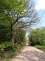 Road past Merrifieldhayes Plantation - geograph.org.uk - 2406598.jpg
