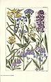 Rocky mountain flowers (Plate 21) (6280207204).jpg