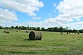 Rolls of Hay in a Field on Tower Road, Salem Township, Michigan - panoramio.jpg