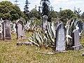 Rookwood agaves.jpg