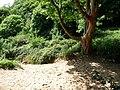 Rope swing near Nicholaston Burrows - geograph.org.uk - 2417006.jpg