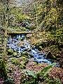 Ruisseau de saint Nicolas, en aval de la cascade. (1).jpg