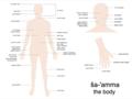 Rumsen Body Parts.png