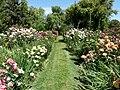 Ruston's Rose garden 3.JPG