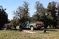 SB VSCC boxwood restoration at Mulberry Hill (15531005033).jpg