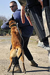 SFS military working dogs train 120227-F-YU668-238.jpg