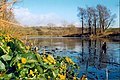 SW end of the Lake at the Welsh Botanic Gardens - geograph.org.uk - 300017.jpg