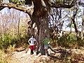 Sacred oak oley pa.jpeg