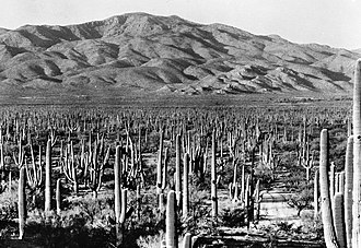Saguaro National Park - Saguaro National Monument (now the Rincon Mountain District) in 1935