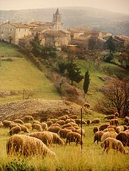 Sheep grazing outside the village in 1997