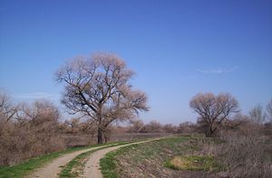 Los Banos, California - North levee, San Luis Refuge - March, 2007