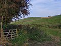 Sancton Wold - geograph.org.uk - 1003949.jpg