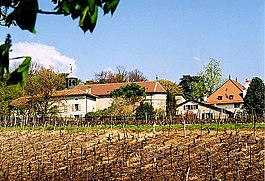 View of the village and vineyards