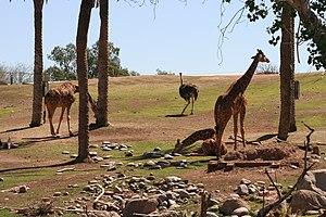Phoenix Zoo - African Savanna habitat
