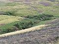Scrub woodland, Faseny Water - geograph.org.uk - 1627533.jpg
