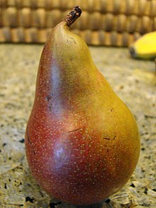Seckel Pear (4466279290).jpg