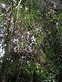 Selva La Mochila.jpg