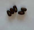 Semillas Erythrina-crista-galli.png