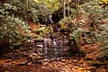 Seneca-creek-waterfall-20 - West Virginia - ForestWander.jpg