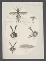 Sepedon - Print - Iconographia Zoologica - Special Collections University of Amsterdam - UBAINV0274 039 07 0041.tif