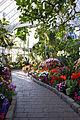 Seymour Botanical Conservatory, interior.jpg