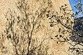 Shadows on boulder at Hidden Valley (16331046306).jpg
