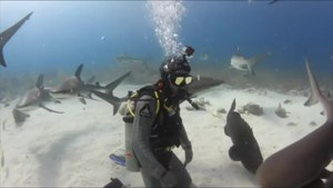 File:Shark diving.webm