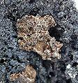 Silver-Cerussite-171926.jpg