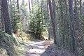 Skogssjön 04.jpg