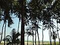 St. Martin's Island (7).JPG