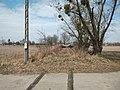 Stare Chałupki, opuszczona bocznica.jpg