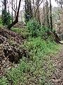 Starr-070908-9282-Eucalyptus globulus-seedlings and growth rebounding after fire-Polipoli-Maui (24266054103).jpg