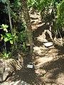 Starr-120522-6434-Phoenix roebelenii-ha bit-Iao Tropical Gardens of Maui-Maui (24776020889).jpg