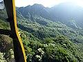 Starr-151005-0010-Aleurites moluccana-aerial view-West Maui-Maui (26256669946).jpg