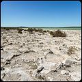 Staying Still 87 - Strange Petrified Mudflat Place.jpg
