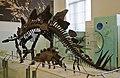 Stegosaurus, American Museum of Natural History (7319157410).jpg